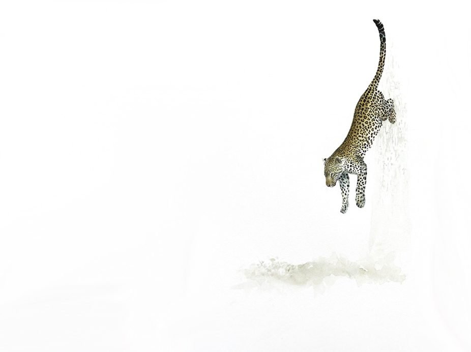 painting of a leopard jumping