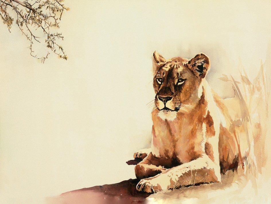 wildlife-art-print-lioness