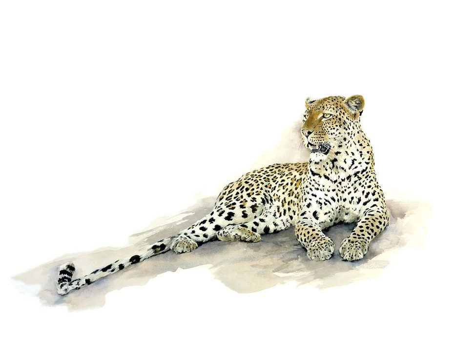 painting of a leopard lying on a rock