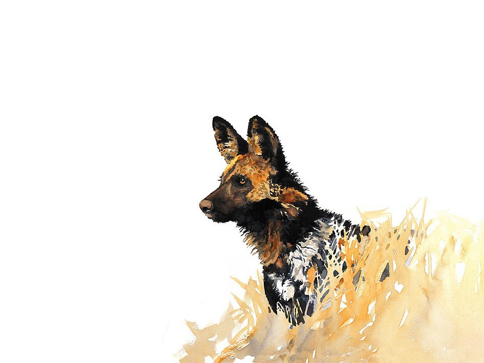 wildlife art wild dog