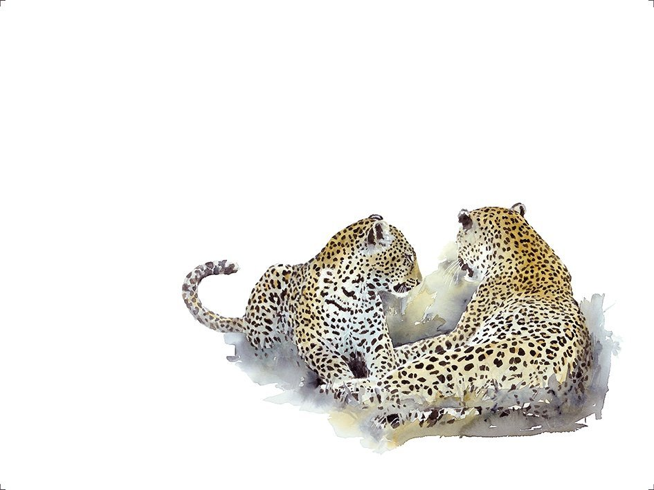 Wildlife art mating leopards