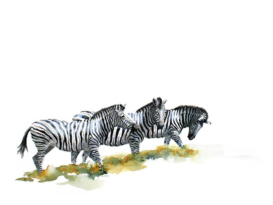 Art print of a zebra group