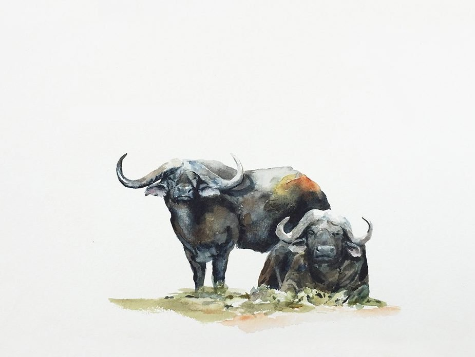 original painting of buffalo bulls