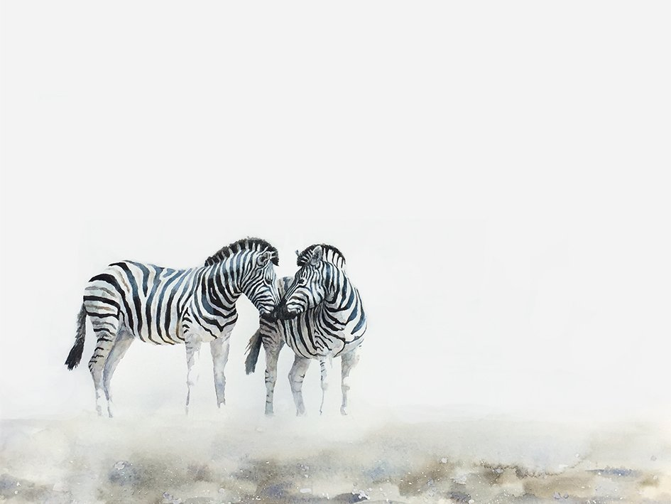 Limited edition art print of zebras