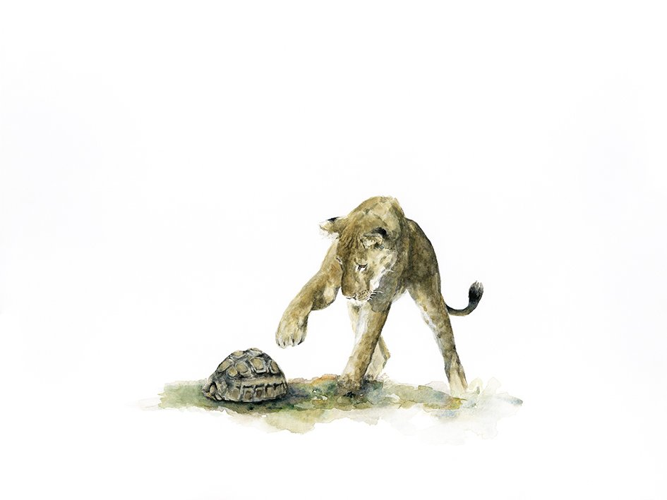 Print of a tortoise and lion cub