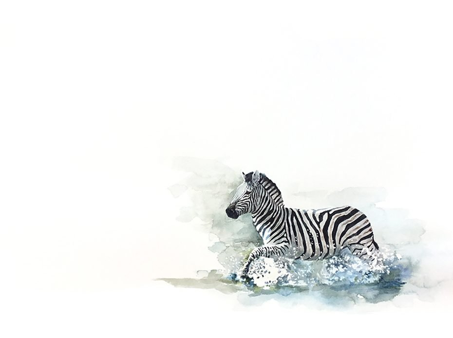 Watercolour original painting of zebra in water