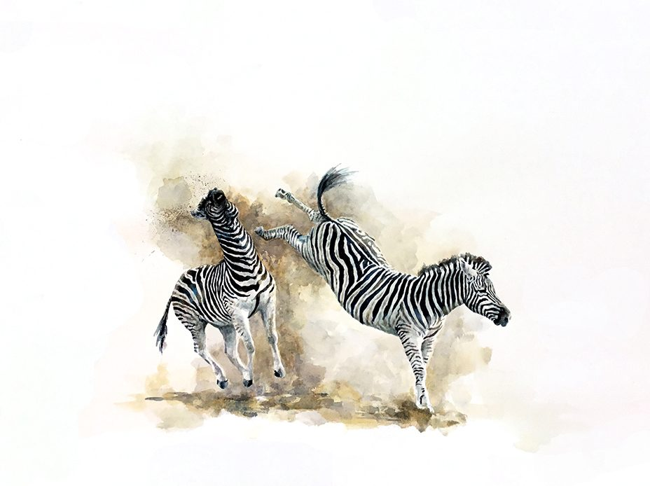 Painting of zebras fighting