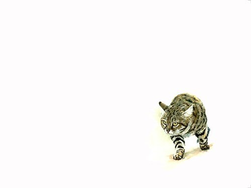 Art print of a black footed cat