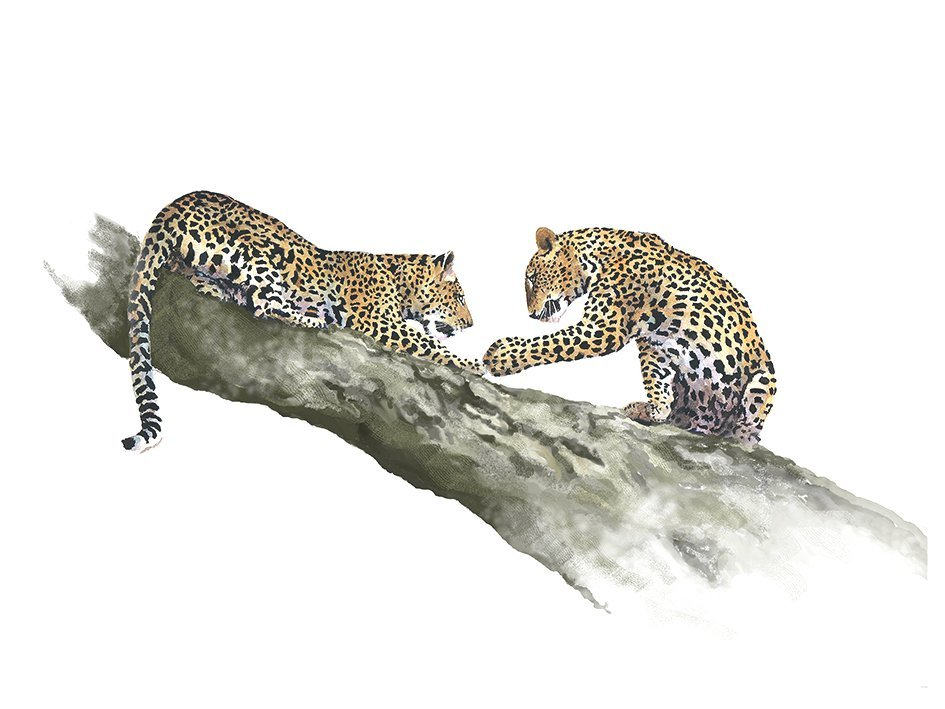 Art print of leopard cubs playing