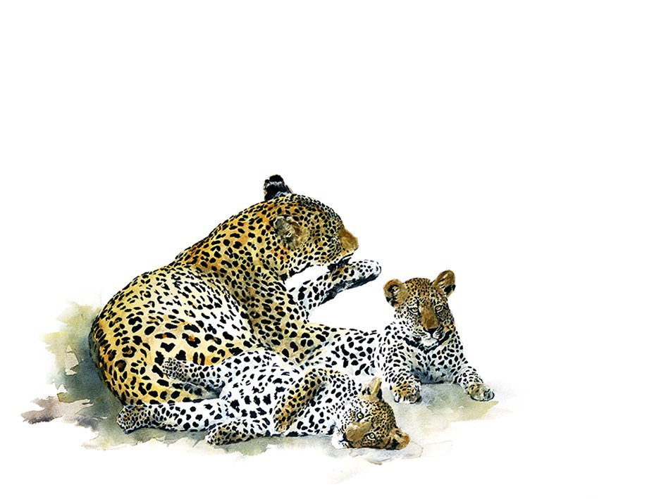 Leopard and cubs art print
