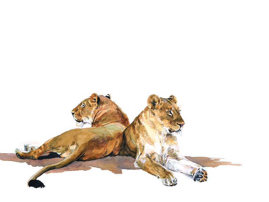 fine art print of lionesses