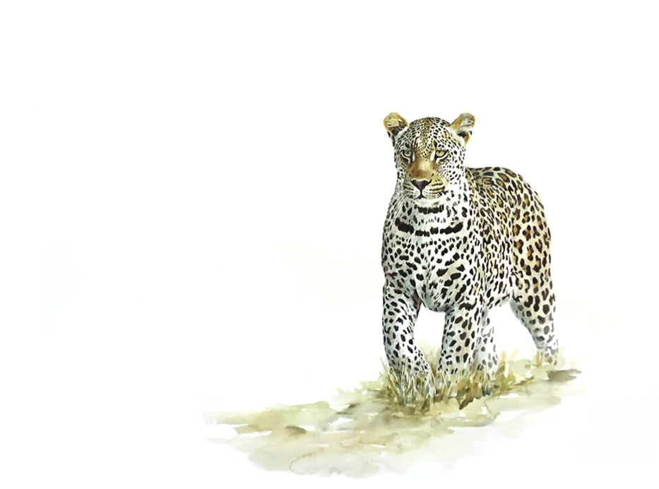 Painting of a leopard hunting