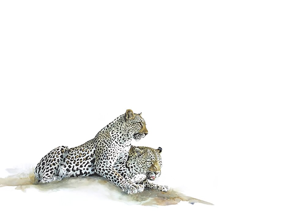 limited edition art print of leopards