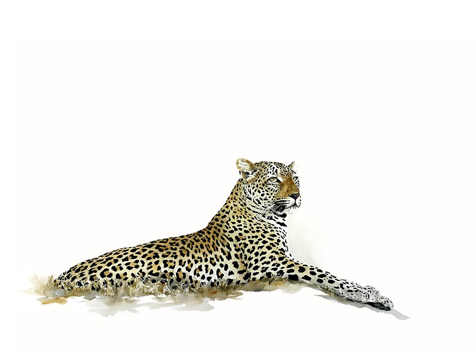 Limited edition print of a leopard