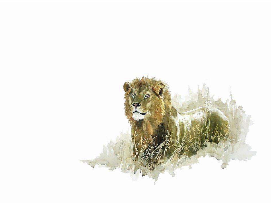 Wildlife art print of a male lion
