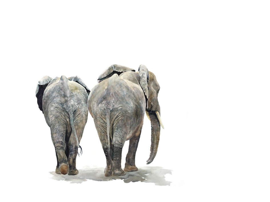 Art Print of elephants from behind