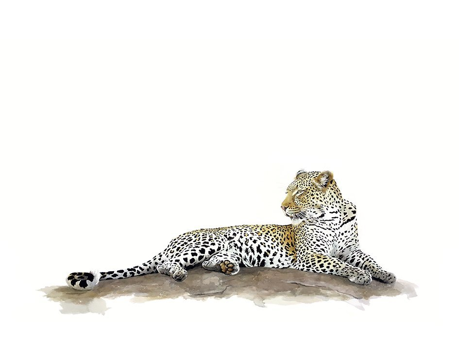 Original watercolour painting of a leopard