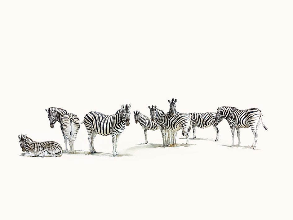 Art print of a zebra herd
