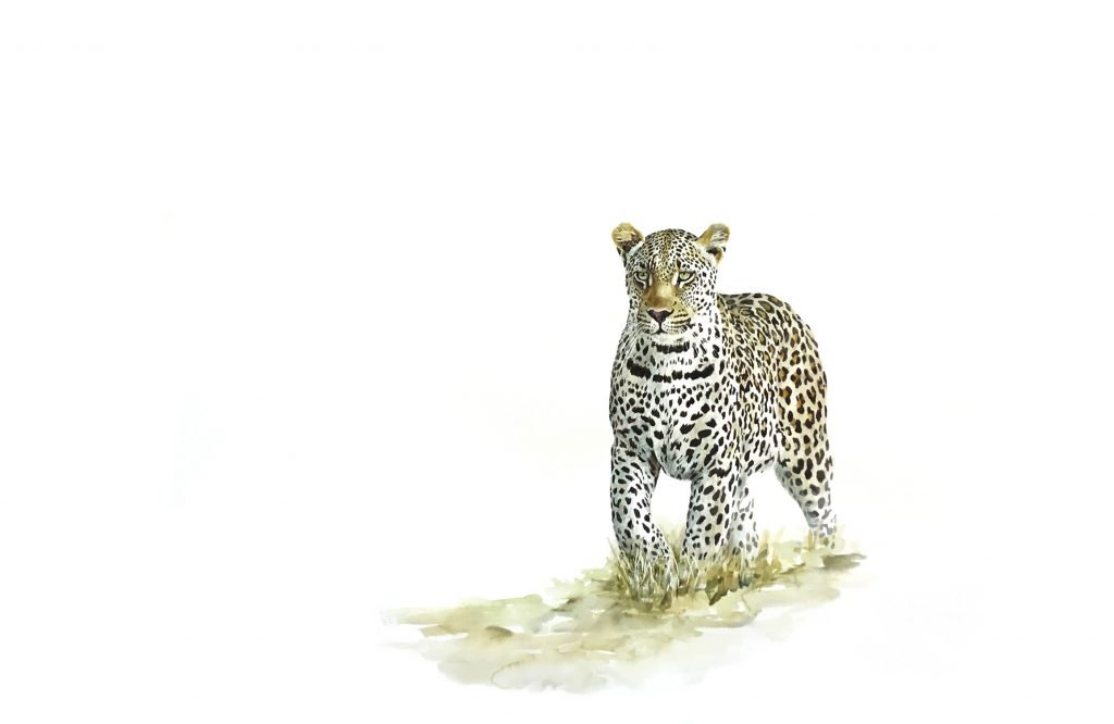 Art print of a leopard stalking prey