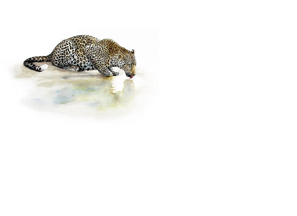 Art Print of a leopard drinking at a waterhole