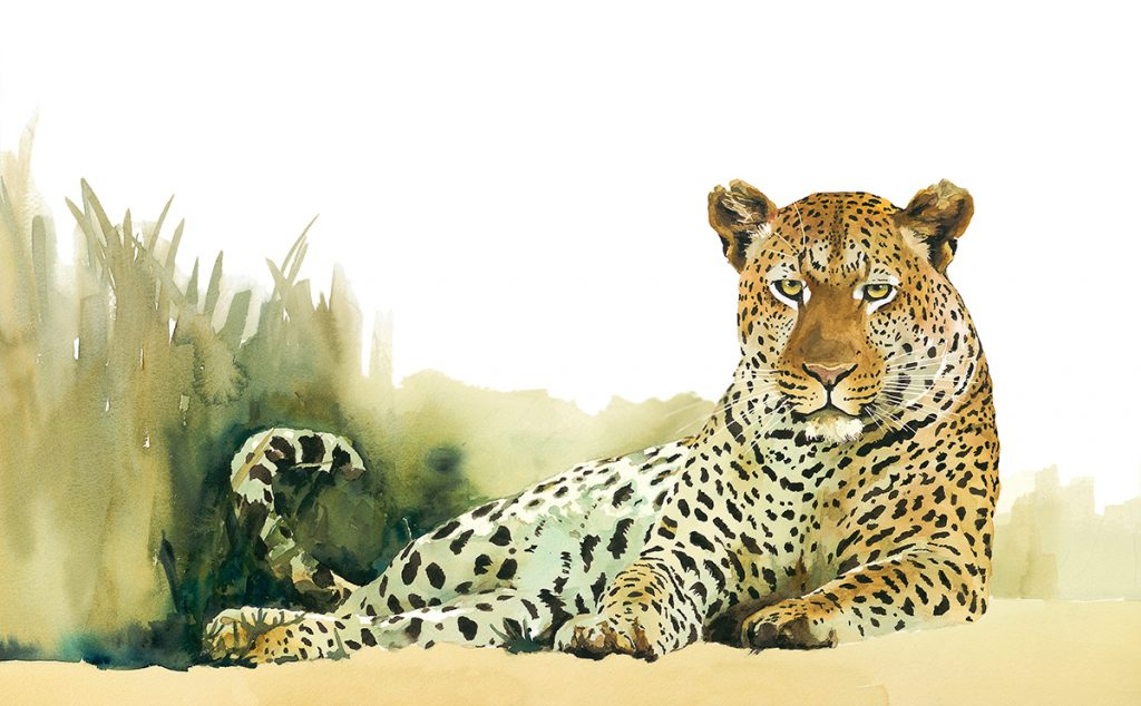 limited-edition-print-leopard