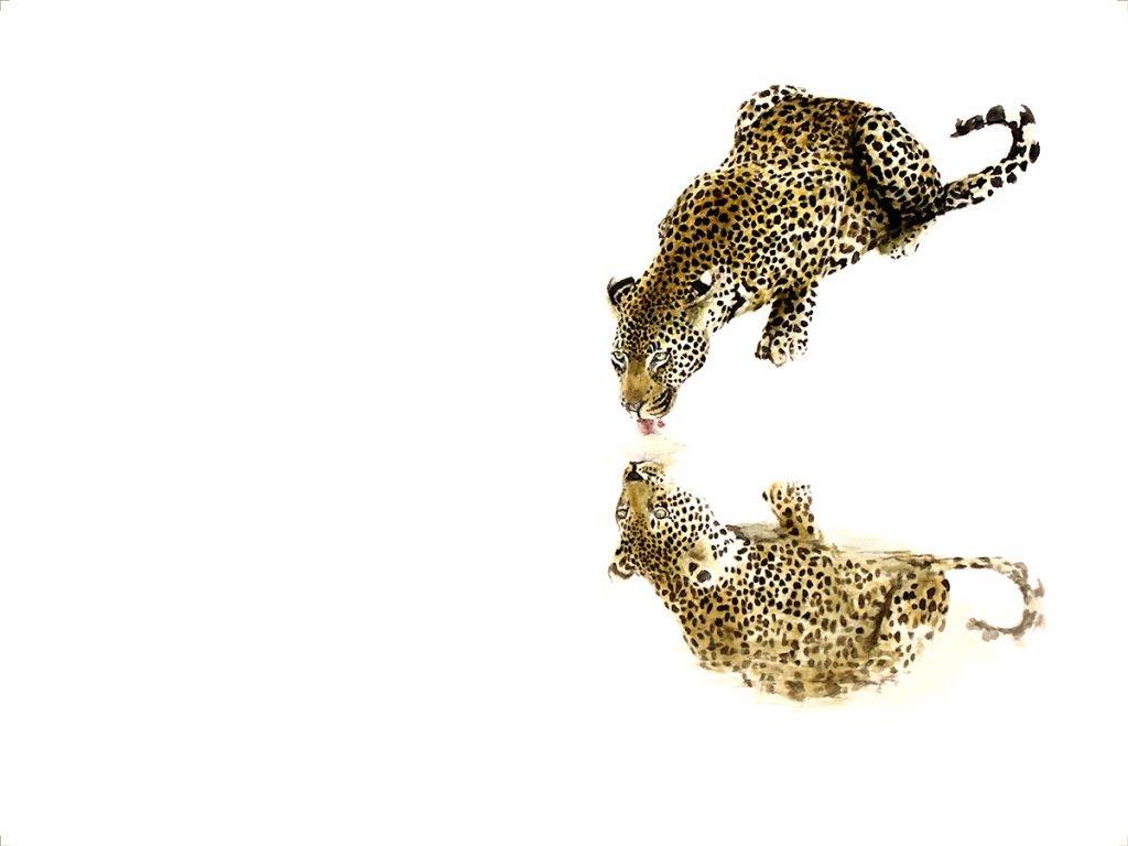 wildlife_art_print_leopard
