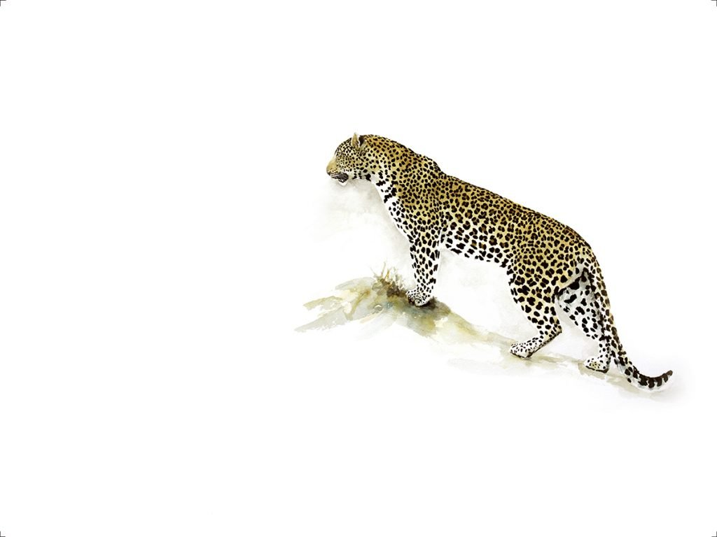 Animal-Art-Print-Leopard