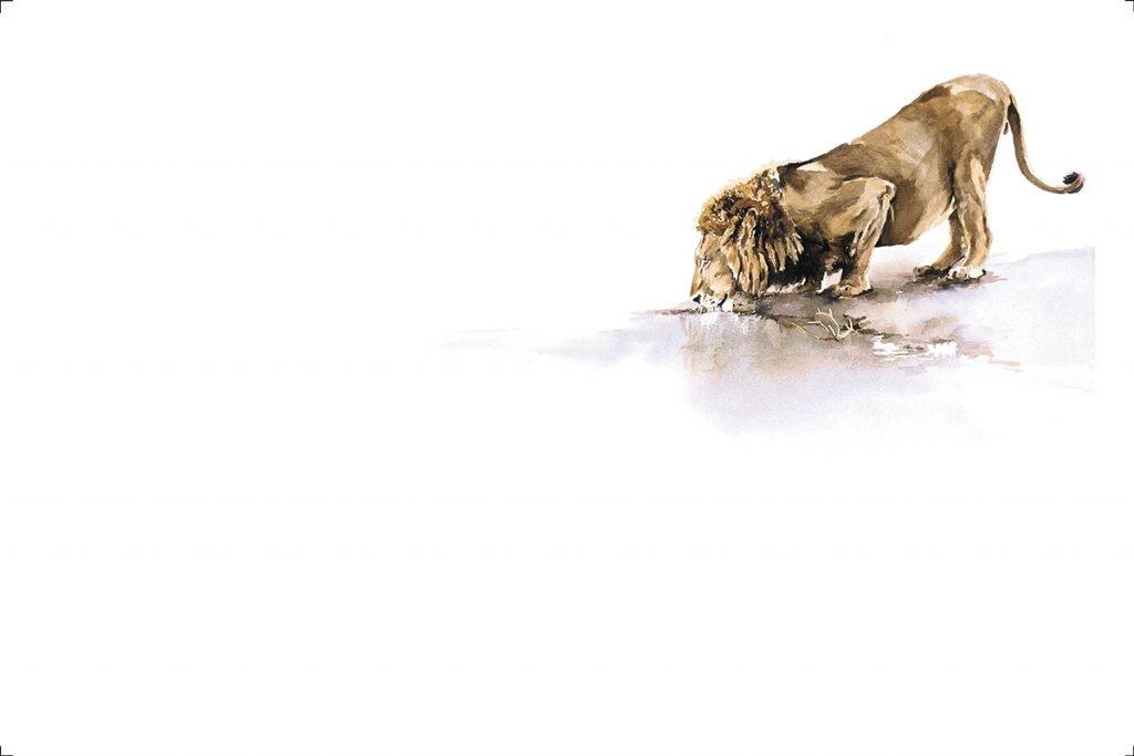art-print-lion-etosha