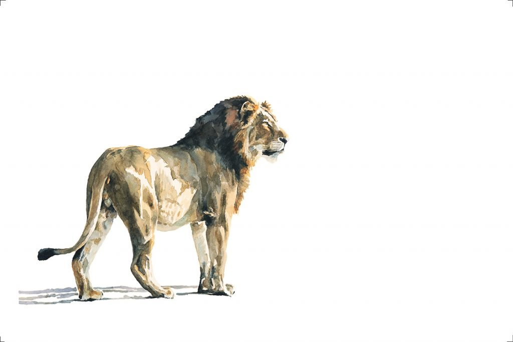 sale-art-print-lion