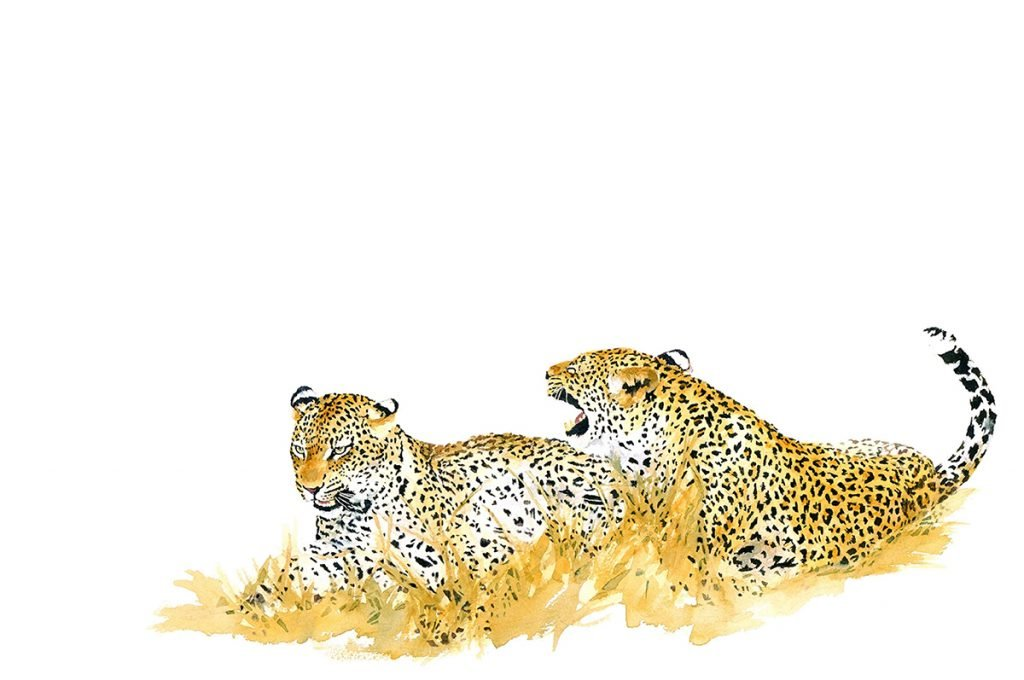 leopards-mating-print