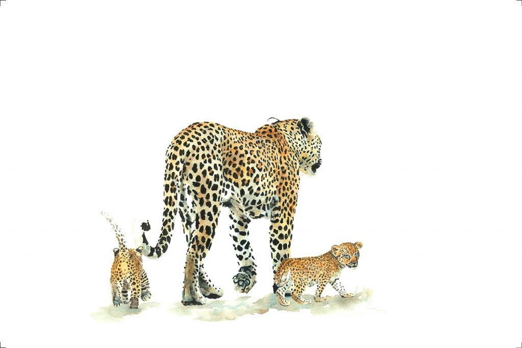 art-print-leopards