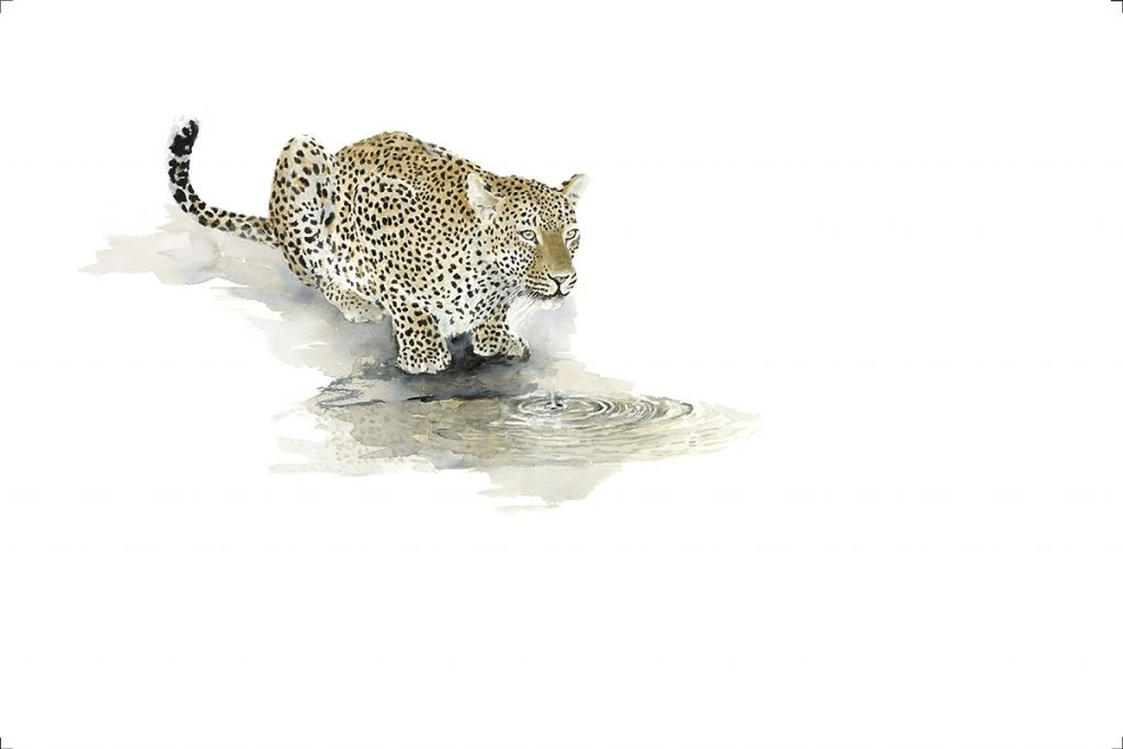 wildlife-art-print-leopard-drinking