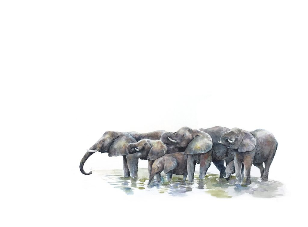 Art print of elephants drinking