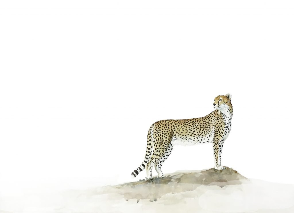 original painting cheetah