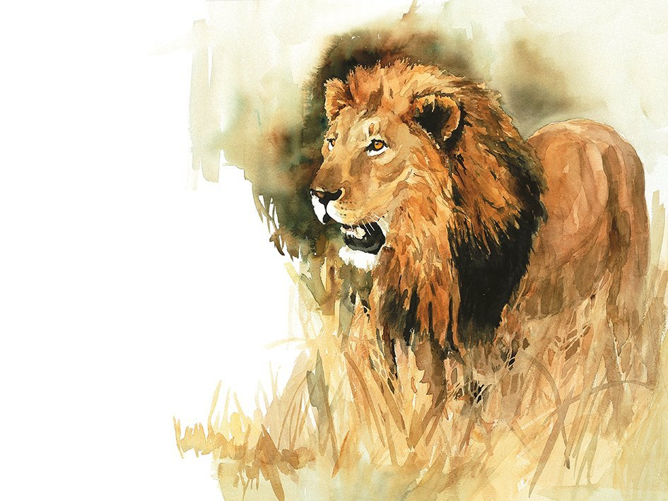 Black-maned-lion-art print