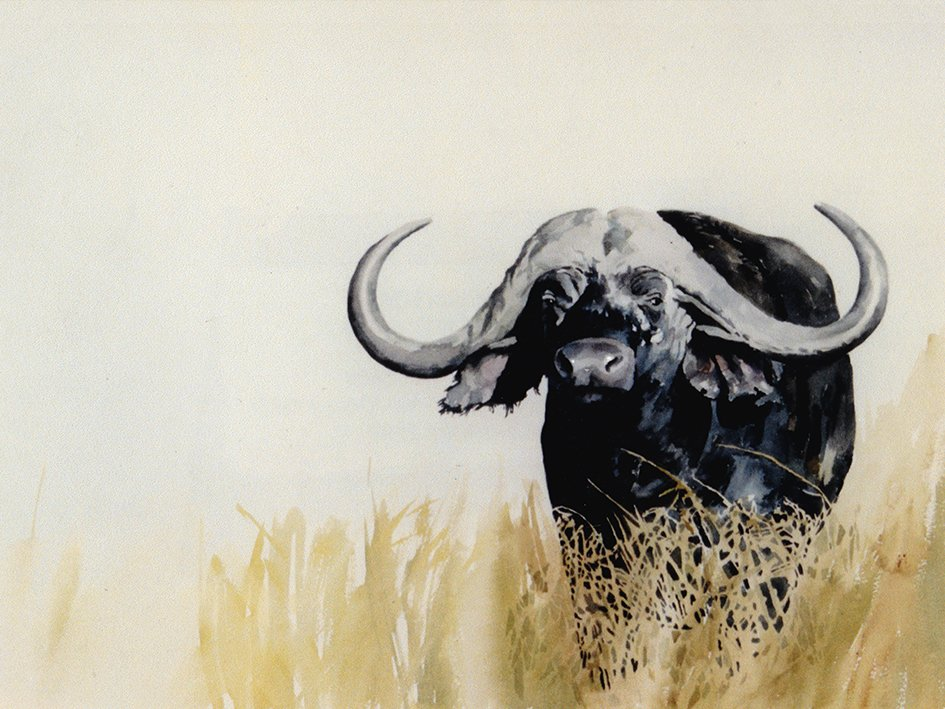 Art Print of a Buffalo Bull