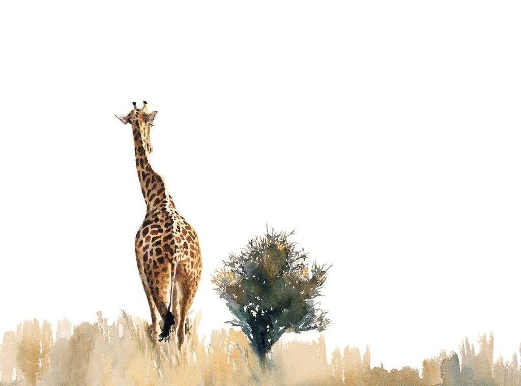 Wildlife painting of giraffe