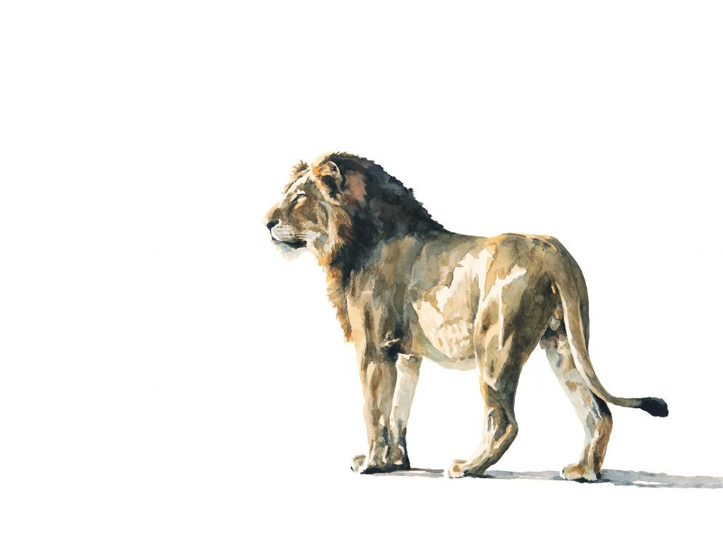 wildlife painting of lion